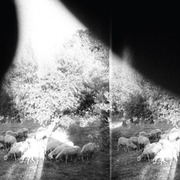LP & MP3 - Godspeed You! Black Emperor - Asunder,Sweet And Other Distress - .. DISTRESS