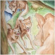 Bonnie 'Prince' Billy - Wolf Of The Cosmos (lp+mp3)