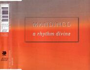 Mandingo - A Rhythm Divine