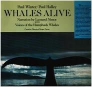 Paul Winter / Paul Halley - Whales Alive