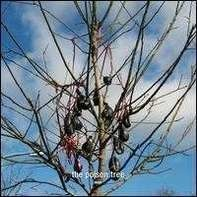 MOBY - POISON TREE/LIE DOWN IN..