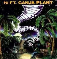 Ten Ft. Ganja Plant - Hillside Airstrip