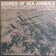Winthrop Niles Kellogg - Sounds Of Sea Animals:  Vol. 2 Florida