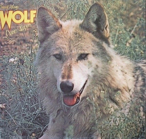 DARRYL WAY'S WOLF - Canis Lupus - LP